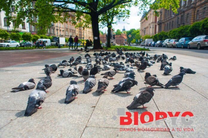 Foto de control de aves en fraga